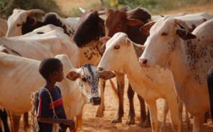 L'élevage au Tchad. © DR