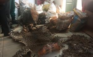 Cameroun : un homme arrêté avec 331 kg d'écailles de pangolins à Yaoundé
