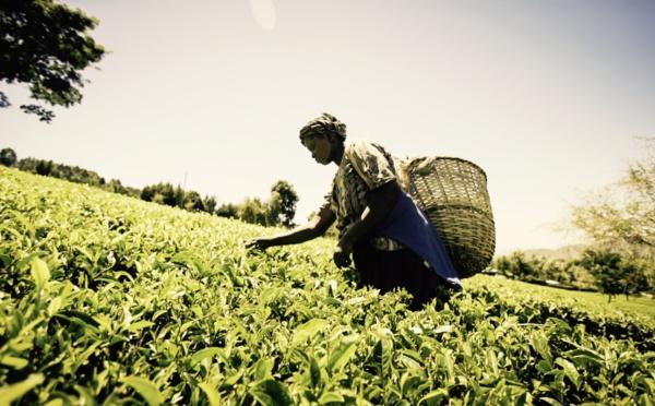 Mastercard lance un Marketplace mobile pour numériser le secteur agricole est-africain