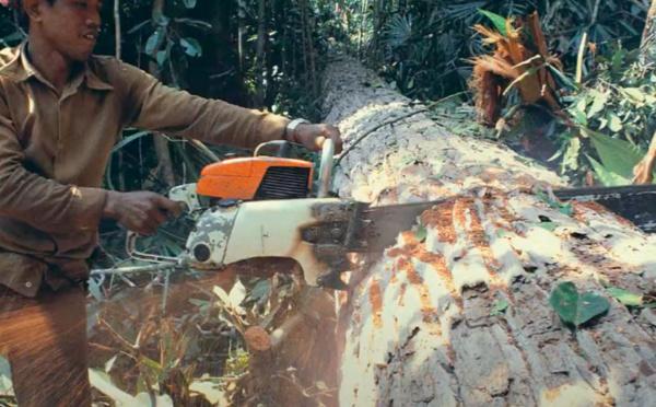 Une analyse globale de la gestion des forêts montre que les communautés locales sont souvent perdantes