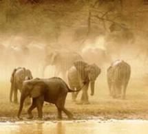 Tchad : Des reproductions théâtrales en faveur de l'écosystème du Parc de Zakouma