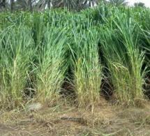 Tchad : l'armée se lance dans l'agriculture à Djarmaya