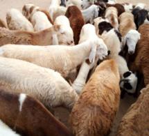 Tchad : un terrain attribué pour le futur marché à bétail de Faya