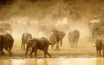 Eléphants dans le parc national de Zakouma. Alwihda Info/M.A.