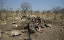 La carcasse d'un rhinocéros blanc abattu par des braconniers pour récupérer ses cornes, dans le parc national Kruger, en Afrique du Sud, le 21 août 2018. / © AFP/Archives / WIKUS DE WET