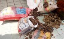Cameroun : Trois trafiquants fauniques au tribunal à Douala