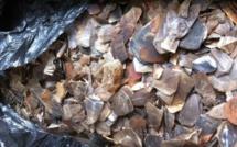 Les pangolins sont totalement protégés par la loi camerounaise.