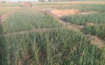 Tchad : le camp de formation Aya Chad galvanise les agripreneurs